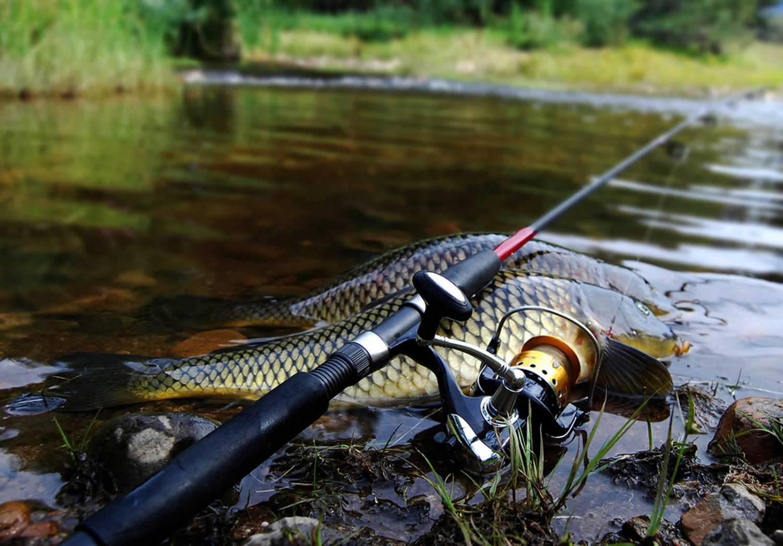снасти для рыбалки карпа